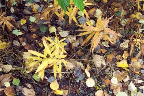 Foliage - Hike to Thunderbird Falls