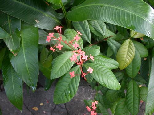 Foliage_4