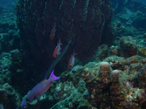 Squirrel_fish_and_creole_wrasse